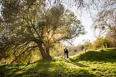 Want pics by the big beautiful, fairy tale looking trees in the park. Irvine Regional Park Engagement, Jason Burns Photography