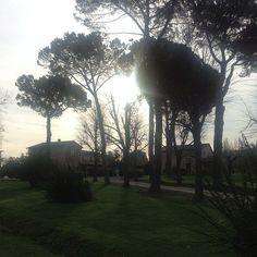 Passeggiando al mattino tra i pini della #maremma