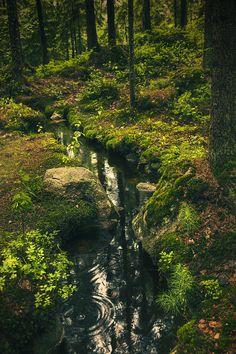 Stream in forest in Finland by Sandra Rugina