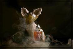 """Oud 777 Eau de Parfum unisex: продажа, цена в Киеве. от """"Laparfums"""" - 784156167 Painting, Water, Painting Art, Paintings, Painted Canvas, Drawings"""