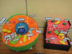 KaTiE's KLaSsrOoM: Cell Functions Project (5th grade)