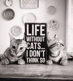 I believe this 100%. My cats mean the world to me and I can't imagine not having them around.