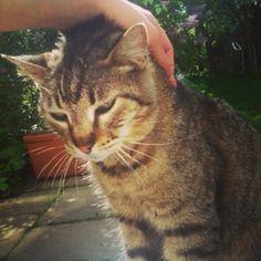 Minky Katze | Pawshake Köln