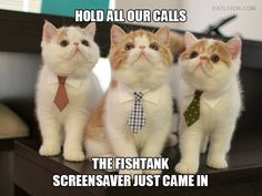 If You Had a Cat Boss…