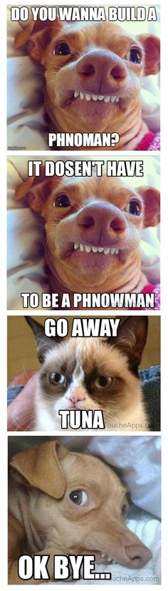 "Tuna (aka Phteven) and Tartar Sauce (aka Grumpy Cat) ""Do you wanna build a Phnoman? Funny Animal Quotes, Animal Jokes, Cute Funny Animals, Funny Animal Pictures, Funny Cute, Funniest Pictures, Random Pictures, Baby Pictures, Grumpy Cat Quotes"