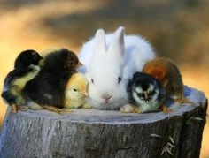 <b>These guys LITERALLY have chicks all over them.</b>