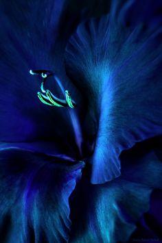 Turquoise, Aqua And Teal. Teal, best color ever! Shades Of Turquoise, Shades Of Blue, Turquoise Art, Teal Colors, Color Azul, Tiffany Blue, Teal Green, Aqua, Dark Teal
