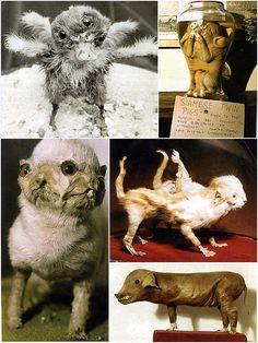 taxidermy, Walter Potter, Victorian, cat, mutants