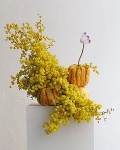 My Flower, Flower Art, Flower Power, Ikebana Arrangements, Floral Arrangements, Australian Native Flowers, Botanical Gardens, Planting Flowers, Floral Design