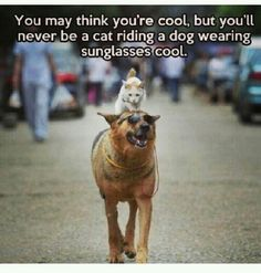 You'll never be that cool.
