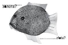 Złota rybka? #radarmagazine #8 #radar #reportaż #8