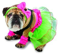 Rasta Imposta 80's Party Dog Costume, Medium Rasta Imposta…