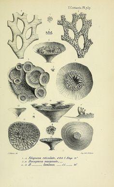 Paléontologie Française :. Paris : Chez l'auteur,1840-1894. | Biodiversity Heritage Library, Smithsonian Institute
