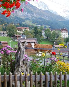 Wengen, Switzerland...a little bit of country while visiting the mountains.