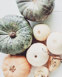 pumpkins, pastel tones, food photography Fall Season, Pumpkins, Watermelon, Food Photography, Coconut, Pastel, Seasons, Fresh, Instagram Posts