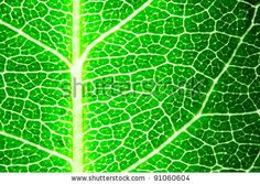 Green leaf macro, may be used as background - stock photo