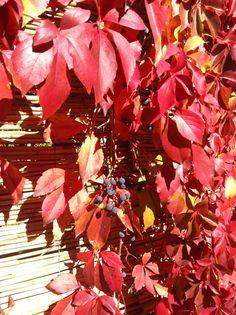 Autumn Autumn, Fall, My World, My Photos, Painting, Color, Paintings, Colour, Draw