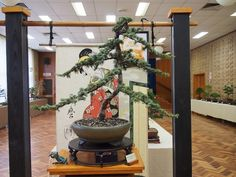 Lifestyle | Waverley Bonsai Group: Head to Mount Waverley for annual show