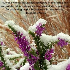 Winter is garden planning time. Time to go through nursery catalogs and dream of spring flowers and summer gardens.