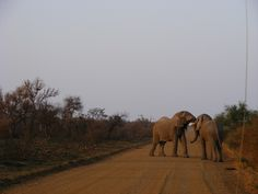 Elephant Elephant, Spaces, Animals, Animales, Animaux, Elephants, Animal Memes, Animal, Animais