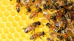 Women work together to save the bees