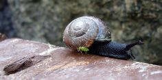 Snail and his/her small buddy | Flickr - Photo Sharing!