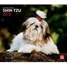 For the Love of Shih Tzus 2013 Deluxe Wall Calendar | Dog Calendars | CALENDARS.COM