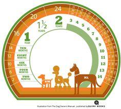 Infografia super fácil de como calcular la edad de tu perro