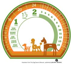 Once you've determined the age in dog years you can use this chart to see the equivalent in human years.   How to Tell a Dog's Age    If you've taken in a dog whose age is unknown, there are some ways to determine his age. Here are some things vets check to get a general sense of how old a dog is:    The Teeth: Dogs usually have a set of permanent teeth by their seventh month, so if you've come across a dog with clean pearly whites, he is likely a year old or thereabouts. Yellowing on a dog'...