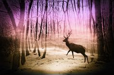 Deer in a foggy forest Canvas Print A deer is walking through the forest on a winter morning. Photomontage of some photos of my own.   Nature, landscape, winter, trees, light, fog, purple, sepia, red deer