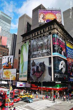 Immauari YouTube #bully #animals #immauari #american bully #nature #animals lover #abkc #bullylove #bestfriend #cani #chien #animals #viaggio #top