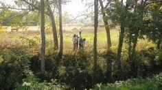 Neteja al Torrent by SES Gurb, via Flickr Connect, Country Roads, Nature, Plants, Naturaleza, Planters, Plant, Planting, Scenery