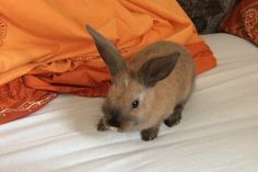 Rabbit, Pets, Animals, Animals And Pets, Animales, Animaux, Rabbits, Bunny, Bunnies