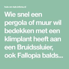 Wie snel een pergola of muur wil bedekken met een klimplant heeft aan een Bruidssluier, ook Fallopia baldschuanica genoemd, een goede bedekker. De ver...