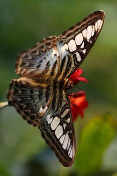 Winged Wonders by Randy Keeling**