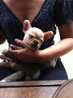 Oldie but goodie. Charlie's first brunch. #frenchie #puppy