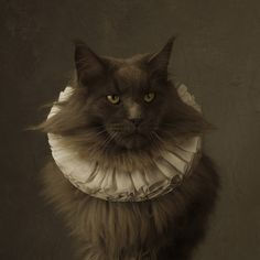 Marie Cecile Thijs, Cat with White Collar © Marie Cecile Thijs, 2014