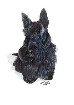 Original watercolour painting of a Scottish terrier.    Painted on high quality 300 g watercolour acid free cold press surface paper.    PAPER SIZE: A4