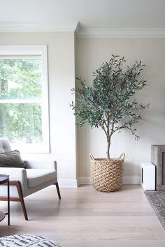 Faux olive tree from Crate and Barrel. I'm adding lots of indoor plants to our new home. Here are my favorite plants, planters, and tips to keep them all along. Including snake plants, pothos, chinese evergreen and more. Casual Living Rooms, Boho Living Room, Living Room Decor, Living Room With Plants, Modern Living, Crate And Barrel, Lounge, Faux Olive Tree, Indoor Olive Tree