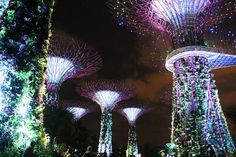 Garden Rhapsody at Gardens by the Bay - Best Free Things to Do in SIngapore