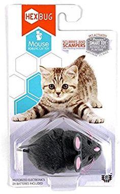 spielschiene f r katzen gadgets coole sachen pinterest katzen hund und katze und katzen. Black Bedroom Furniture Sets. Home Design Ideas