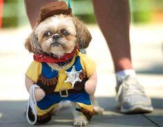 perro sheriff