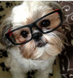 "Click visit site and Check out Best ""Shih Tzu"" T-shirts. This website is outstanding. Tip: You can search ""your name"" or ""your favorite shirts"" at search bar on the top."