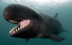 photogenic-whale