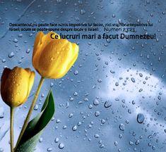 Versete de Aur : 01.11.2013 - 01.12.2013 Aur, Fruit