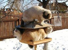 Hey...!  (...in the bird feeder...of course!  :)