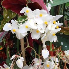 White orchids  #gzhomaggio @geliebteszuhause #orchids #orchideen #flowers #orchidee #phalaenopsis #phalaenopsisorchid #blumen #blumen #pflanzen #urbanjungle #home #cozy #plants