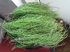 KOKEN MET ONKRUID - heermoes Garden Weeds, Herb Garden, Vegetable Garden, Facts About Plants, Edible Wild Plants, Herb Recipes, Organic Farming, Healthier You, Fauna