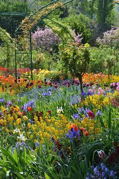 Spring in Monet's Garden, Giverny, Upper Normandy, France