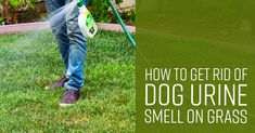How to Get Rid of Dog Urine Smell on Grass - Simple Green Cleaning Pet Urine, Pet Odors, Cat Urine Smells, Dog Smells, Dog Repellent Spray, Dog Pee Smell, Pet Odor Eliminator, Outside Dogs, Dog Yard